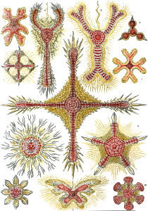 https://openclipart.org/image/300px/svg_to_png/229110/Haeckel_Discoidea.png