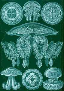 https://openclipart.org/image/300px/svg_to_png/229115/Haeckel_Discomedusae_88.png
