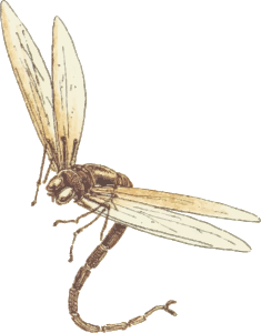 https://openclipart.org/image/300px/svg_to_png/229235/Dragonfly2.png