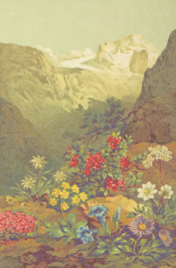 https://openclipart.org/image/300px/svg_to_png/231586/AlpinePlants.png