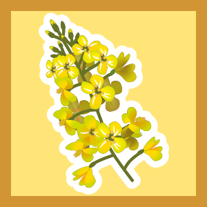 https://openclipart.org/image/300px/svg_to_png/231904/Canola-Plant.png