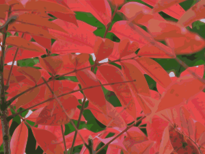 https://openclipart.org/image/300px/svg_to_png/232046/autumn-leaves-01.png
