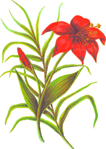 https://openclipart.org/image/300px/svg_to_png/232199/Flower3.png