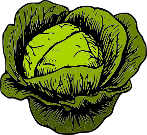 https://openclipart.org/image/300px/svg_to_png/232225/green_cabbage.png