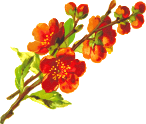 https://openclipart.org/image/300px/svg_to_png/232422/Flower6.png