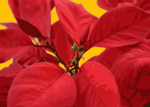 https://openclipart.org/image/300px/svg_to_png/233483/poinsettia.png