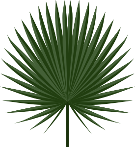https://openclipart.org/image/300px/svg_to_png/233707/Sabal-leaf-by-Rones.png