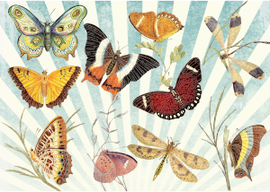 https://openclipart.org/image/300px/svg_to_png/233920/Butterflies-And-Dragonflies.png