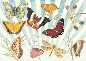https://openclipart.org/image/300px/svg_to_png/233921/Butterflies-And-Dragonflies-Ultra-High-Detail.png