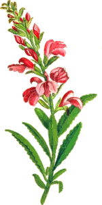 https://openclipart.org/image/300px/svg_to_png/235235/Flower15.png