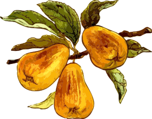 https://openclipart.org/image/300px/svg_to_png/236903/Pears.png