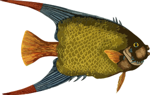 https://openclipart.org/image/300px/svg_to_png/237244/Fish5.png