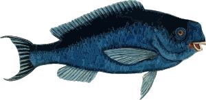 https://openclipart.org/image/300px/svg_to_png/237245/Fish6.png