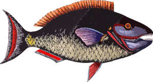 https://openclipart.org/image/300px/svg_to_png/237246/Fish7.png