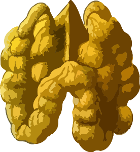 https://openclipart.org/image/300px/svg_to_png/237820/Walnut2Lores.png