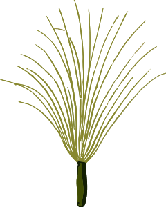 https://openclipart.org/image/300px/svg_to_png/238004/ColtsfootSeedLores.png