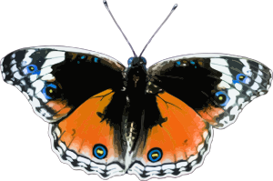 https://openclipart.org/image/300px/svg_to_png/238168/Butterfly3.png