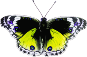 https://openclipart.org/image/300px/svg_to_png/238169/Butterfly4.png