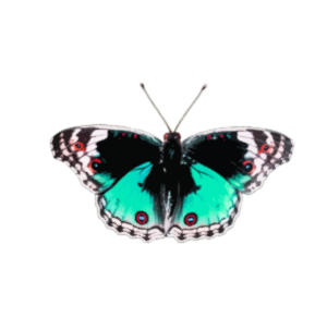 https://openclipart.org/image/300px/svg_to_png/238170/Butterfly5.png