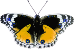 https://openclipart.org/image/300px/svg_to_png/238171/Butterfly7.png