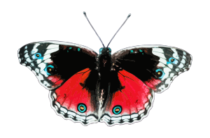 https://openclipart.org/image/300px/svg_to_png/238172/Butterfly6.png