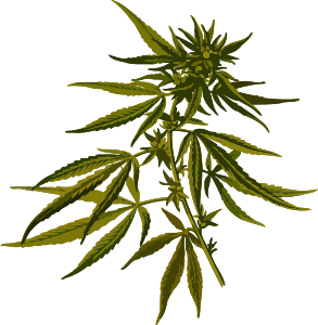 https://openclipart.org/image/300px/svg_to_png/238185/CannabisLores.png