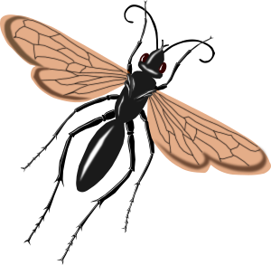 https://openclipart.org/image/300px/svg_to_png/239517/wasp.png