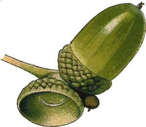 https://openclipart.org/image/300px/svg_to_png/239970/Acorn3Hires.png