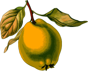 https://openclipart.org/image/300px/svg_to_png/240619/Quince3Lores.png