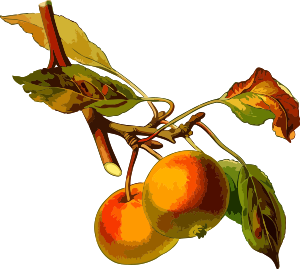 https://openclipart.org/image/300px/svg_to_png/240816/AppleTree2Lores.png
