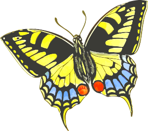 https://openclipart.org/image/300px/svg_to_png/240981/Butterfly9.png