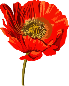 https://openclipart.org/image/300px/svg_to_png/241196/OpiumPoppy2Lores.png