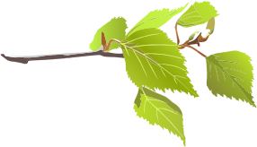 https://openclipart.org/image/300px/svg_to_png/241497/Branch-And-Green-Leaves.png