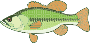 https://openclipart.org/image/300px/svg_to_png/241513/Bass-Illustration.png