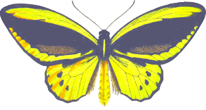 https://openclipart.org/image/300px/svg_to_png/243281/Ornithoptera.png