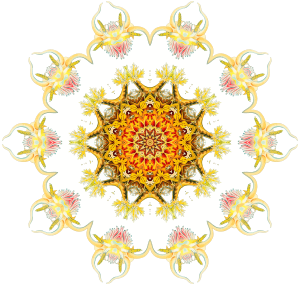 https://openclipart.org/image/300px/svg_to_png/243333/Nudibranchia5.png