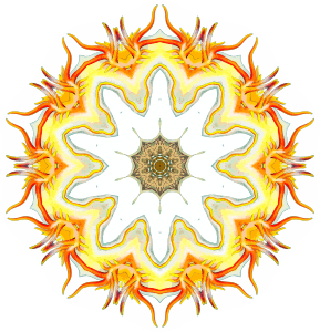 https://openclipart.org/image/300px/svg_to_png/243337/Nudibranchia10.png