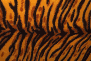 https://openclipart.org/image/300px/svg_to_png/243361/TigerFur.png