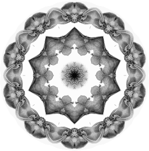 https://openclipart.org/image/300px/svg_to_png/246435/Chiroptera7.png