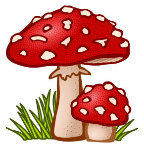 https://openclipart.org/image/300px/svg_to_png/246717/Pilz-coloured.png