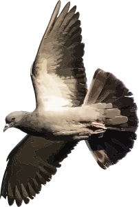 https://openclipart.org/image/300px/svg_to_png/246803/Pigeon.png
