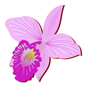 https://openclipart.org/image/300px/svg_to_png/248330/arundina.png