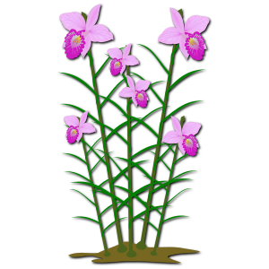 https://openclipart.org/image/300px/svg_to_png/248331/arundina_1.png