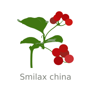 https://openclipart.org/image/300px/svg_to_png/253163/smilax-china.png