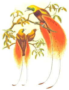 https://openclipart.org/image/300px/svg_to_png/254952/BirdsOfParadise2.png