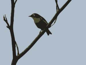 https://openclipart.org/image/300px/svg_to_png/255718/white-eye-01.png
