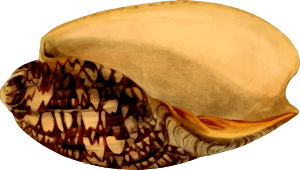 https://openclipart.org/image/300px/svg_to_png/261664/SeaShell24.png