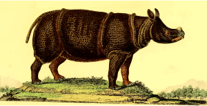 https://openclipart.org/image/300px/svg_to_png/262569/Rhinoceros4.png