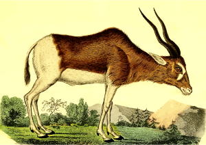 https://openclipart.org/image/300px/svg_to_png/262570/Antelope2.png