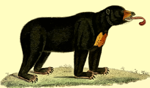 https://openclipart.org/image/300px/svg_to_png/262571/Bear2.png